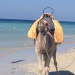 ...il mare e il cammello... :)