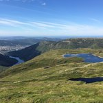 Bergen full sight