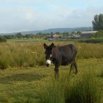 Mac Nean House - Even the donkeys are friendly in Blacklion