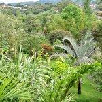 Berni's beautiful garden - tropical paradise in the city