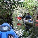 Kayaking the mangroves