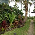 Walk through Ke Iki grounds approaching beach