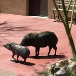 These javelinas aren't real, but inside you will see real ones, and smell them too!