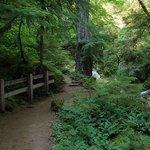 Near beginning of Watson Falls trail