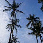Nice palms around the pool