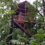 Our fellow couple's tree house