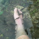 Pedicure in Cenote at Dzibilchaltun