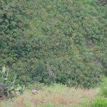 View from Mauna Kahalawai rest stop