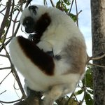 Nosy Anchoa isola privata con lemuri bianchi e lemuri macaco