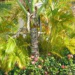 Magnifique végétation