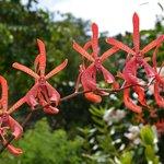 Orchideen im Le Jardin du Roi