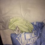 Duvet yellow smelt had to cover them in lavender spray to make it better would recommend to brin