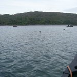 Surrounded by stealthy seals (Loch Moidart)