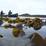 Above the kelp forest? (Loch Moidart)