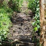 Trail condition - wet season