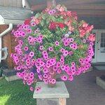 HUGE Flower baskets