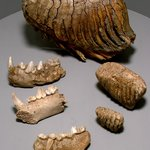 Ice Age fossils from near Laugharne