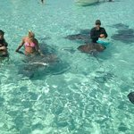 Stingray city!