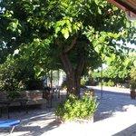 Photo of The Green Villa