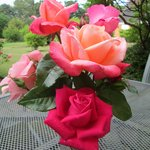 beautiful roses right out side our door