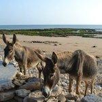 Tagenza beach - Chez Abdou. Donkeys!