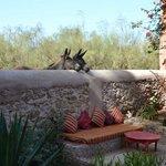 Donkeys coming to say hi at breakfast