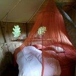 """l'intérieur de la cabane """"Oiseaux)"""