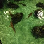 Sharks and sting rays looking for their dinner