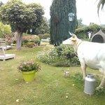 Eclectic garden with a random fake cow!