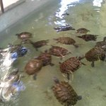 Turtle pools outside lobby