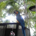 Odie the Parrot