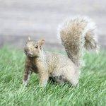 Ecureuil curieux dans le parc en face notre chambre.
