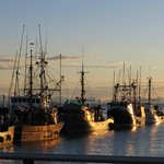 A view of the fishing boats at Steveston