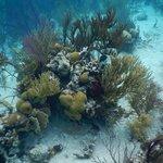 Snorkeling in the Exumas