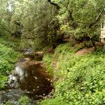Creek outside Cottage #5