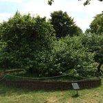 The famous apple tree under which Newton was sitting when he had his big idea.
