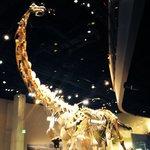 Alamosaurus RAWR!