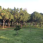 Área de bosque.