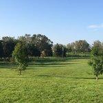 Área verde.