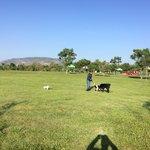 Área de juego para los canes.