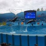 Zoomarine, spectacle de dauphins !