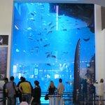 Le grand aquarium du vivarium de Dubaï Mall