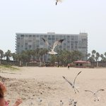 Feeding the birds on the beach with our hotel in background