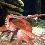 Entertaining Octopus