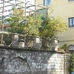 Lemon trees across from the hotel