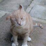 Five toe cats at Hemingway House