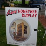 LIVE Honeybee Display. If you find the queen, your ice cream is FREE!