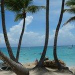 palmeiras em frente a praia do hotel