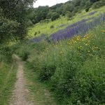 A beautiful display of wild flowers towards the end of the walk