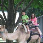 Kids rode camel